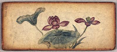 Tibetan album lotus flowers
