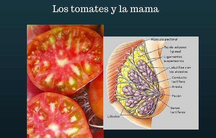 6 frutas y verduras para cada parte de nuestro cuerpo