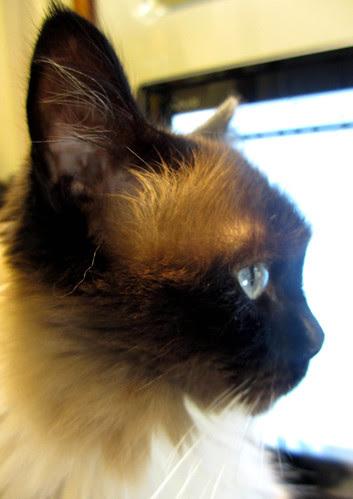 bebop  profile
