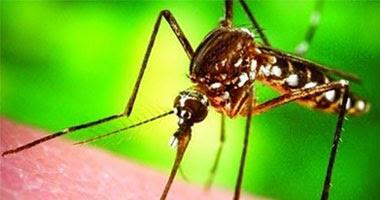 البعوض وسيلة لنقل المرض