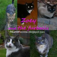 Zoey and the furballs