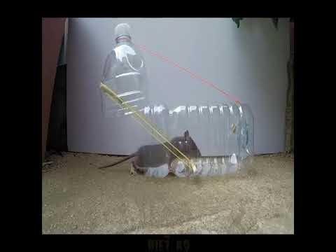 Mẹo chế bẫy chuột đơn giản nhất từ can nhựa 5 lít