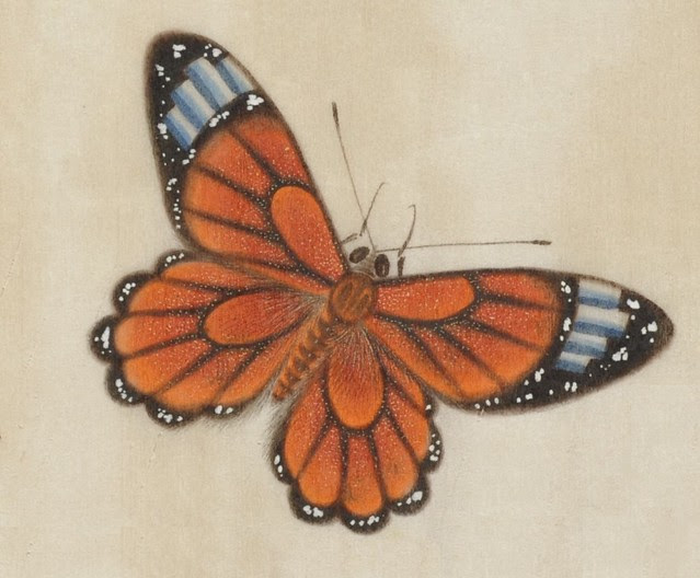 exquisite hand-painted butterfly from 19th c. Chinese watercolour album
