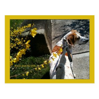 Dog Walk With the Sun Forsythia Postcard