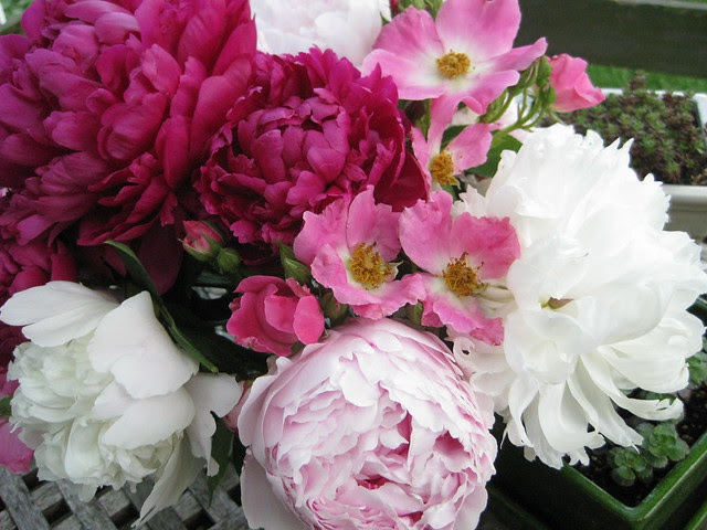 peonies and roses II