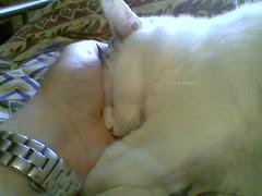 Buona notte, Titina