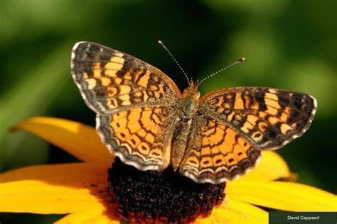kelebek resimleri bueyuek boy diger hayvanlar hobi duenyasi