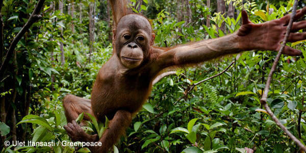 Stop palm oil fuelled deforestation in Indonesia