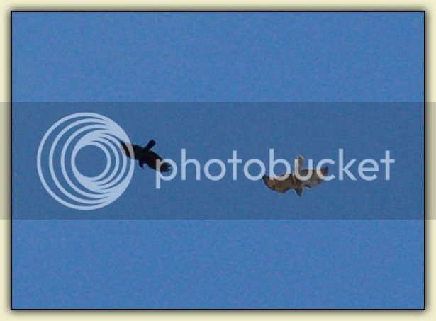 Birdfight 2