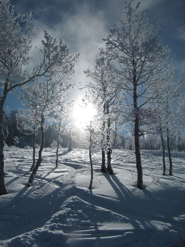 IMG_0578_SunBehindWhiteTrees