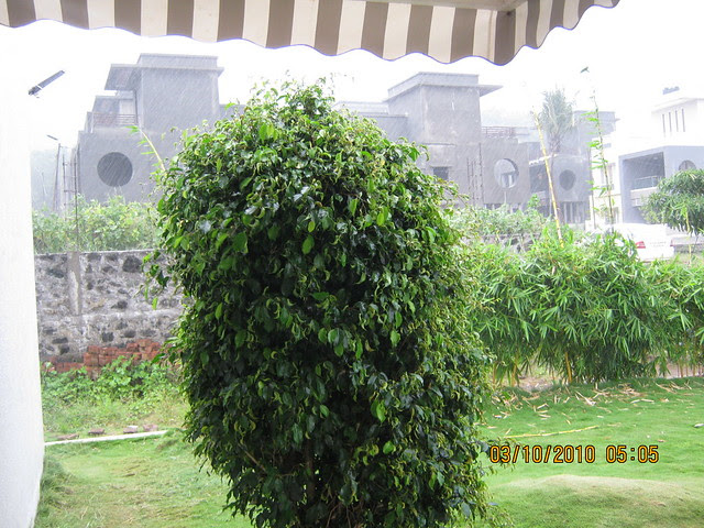 Shreeji Properties' Forest View Bungalows at Somatane PhataIMG_3173