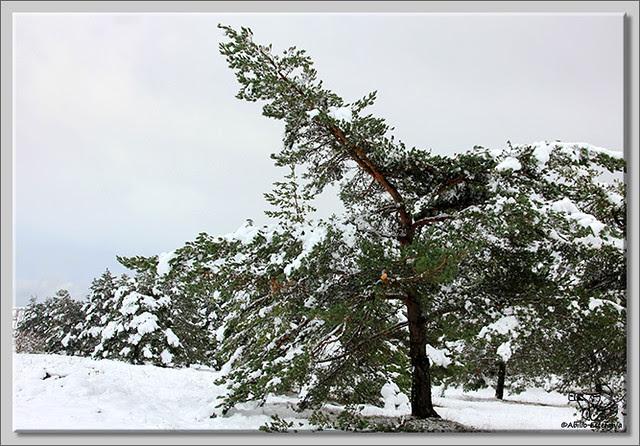 En busca de las primeras nieves (11)