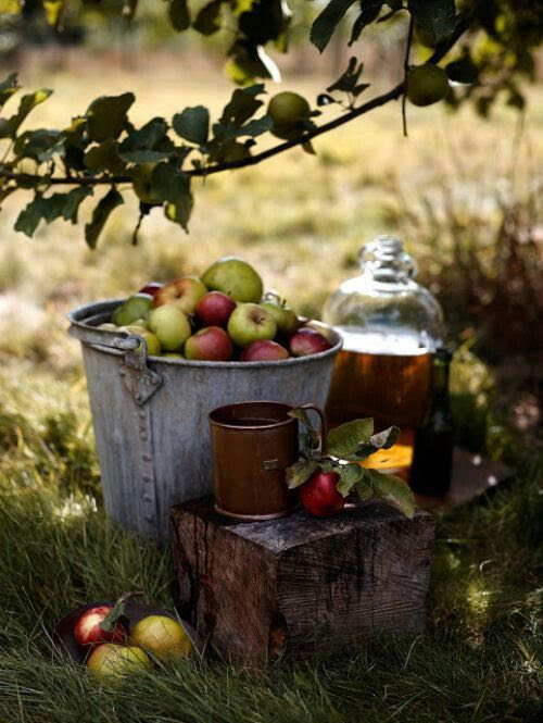 Apple picking and fresh-pressed cider! That is what we are headed to go find! :)