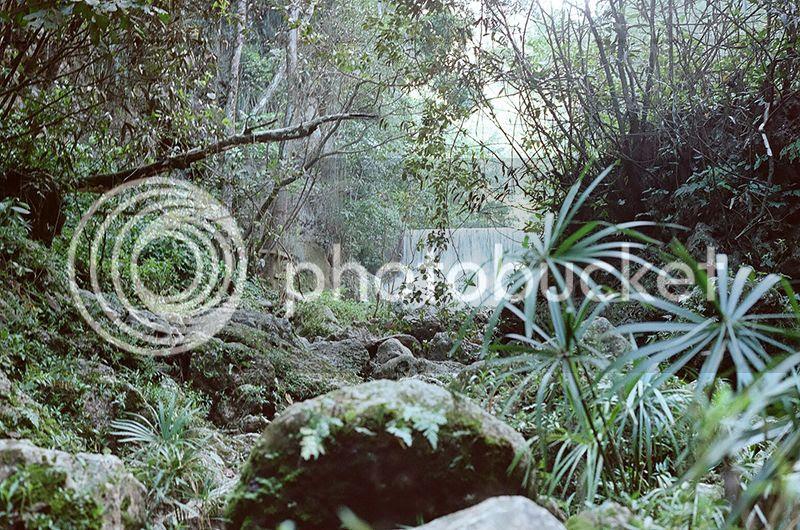 Puerto Rico, Waterfall, Tropical, Beach, Palm trees, Contax G2, Film, 35mm, holiday, vacation, travel, photo Fallforest_zpsvg8b7k0q.jpg