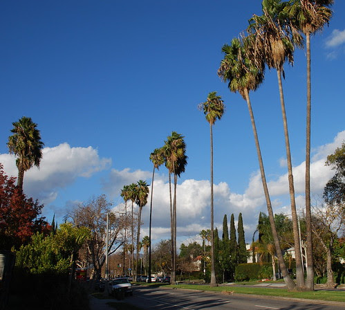 Palm Trees and Median Strip