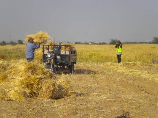 Un campesino trabaja en Gaza mientras una activista lo fotografía / M. Á. M.