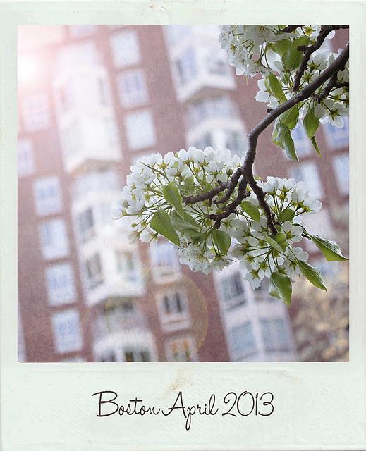 Boston polaroid