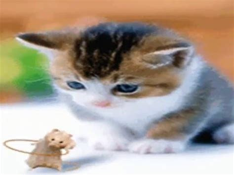 foto kucing lucu bergerak youtube