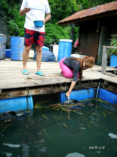 nicole feeding stingray
