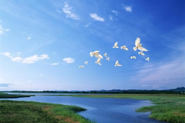 Palomas Blancas Volando Bajo Un Cielo Azul 5484