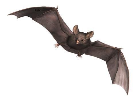 Halloweenplaatjes van vleermuizen