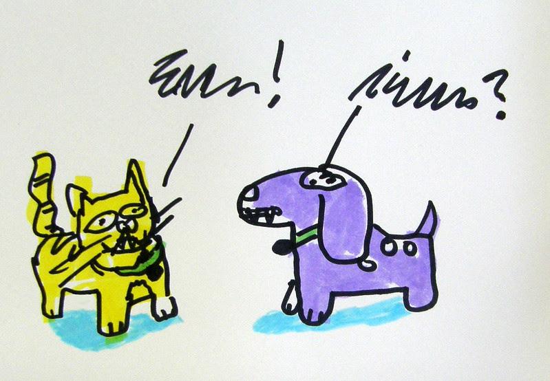 cat & dog converse