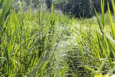 Voyage naturaliste dans l'Yonne méridionale