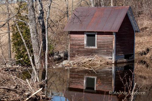 Beaver Pond 5 (25 of 45).jpg