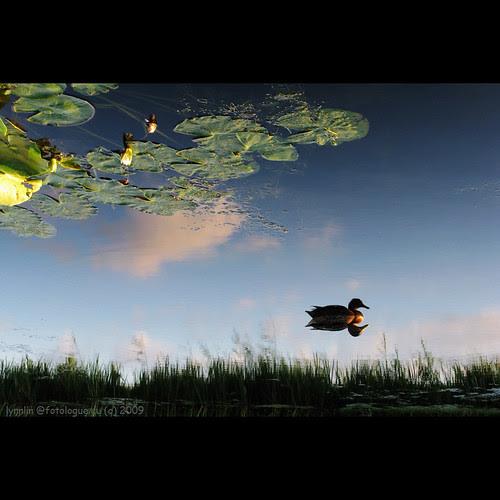 Dream at sunset por lynnlin