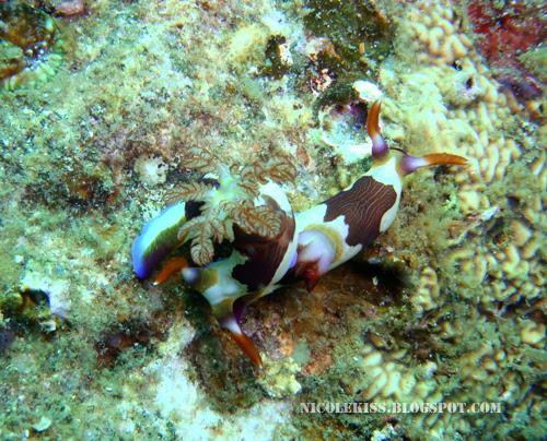 duo nudibranch 3