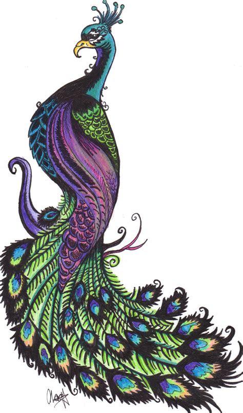 peacock drawing   clip art  clip