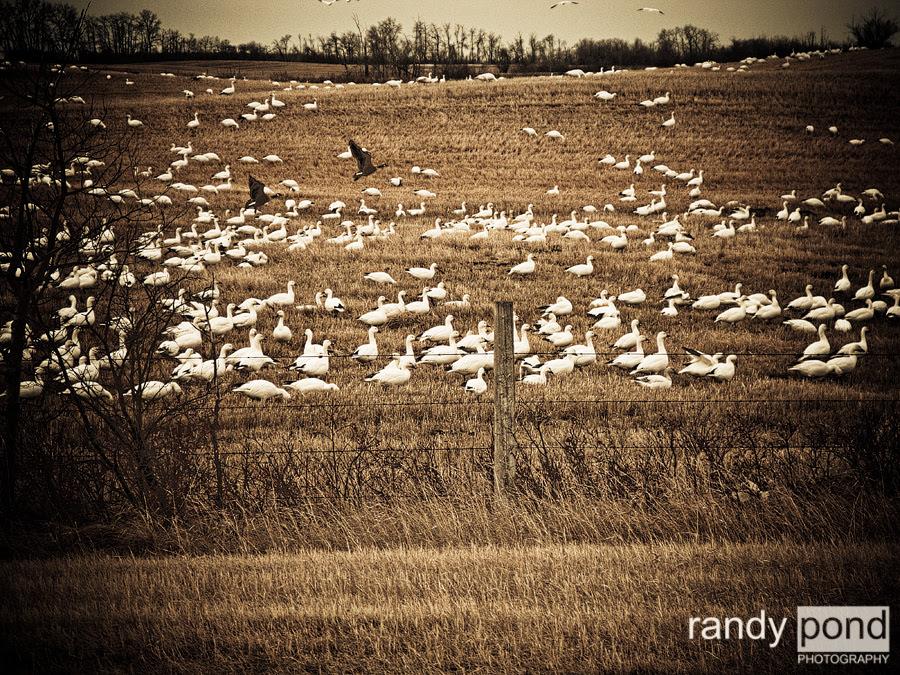 ~ April 20th, Massive Bird Convention ~