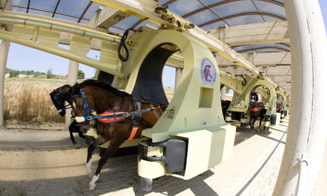 A group of two-year-old horses in training using the Kurt Equine Training System, in Istanbul.