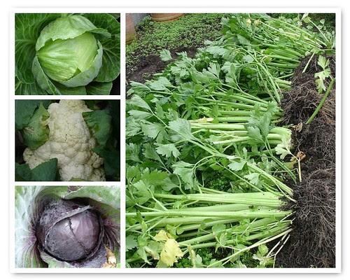 wind-swept garden veg