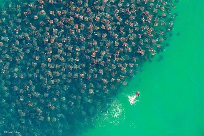 25 Photos of Animal Migration