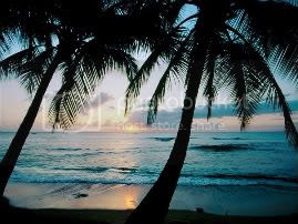 beaches_020-1.jpg hawaii image by islagirl18