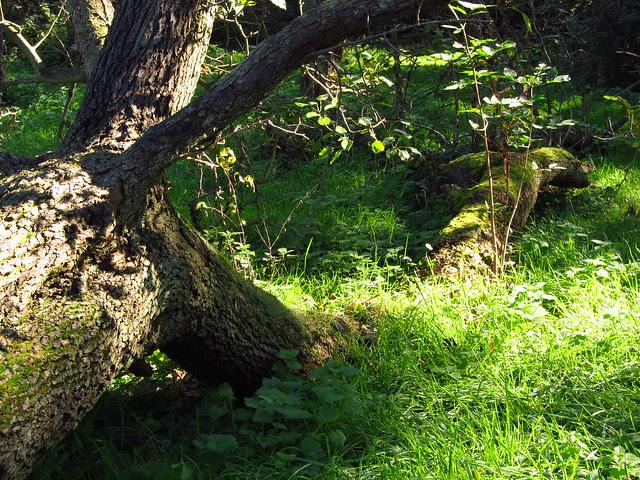Springett's Wood