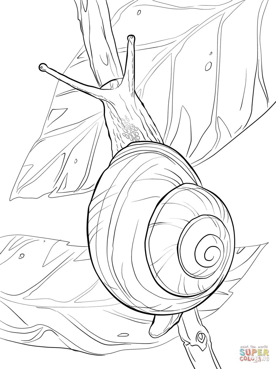 Gartenbänderschnecke