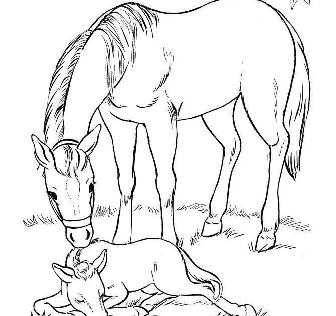 ausmalbilder pferde und fohlen  pferd und fohlen