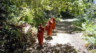 Bhikkhunis-Forest-Pindpata