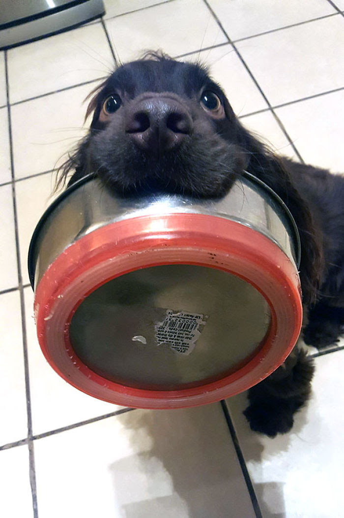 Pupper fait subtilement entendre qu'il a faim