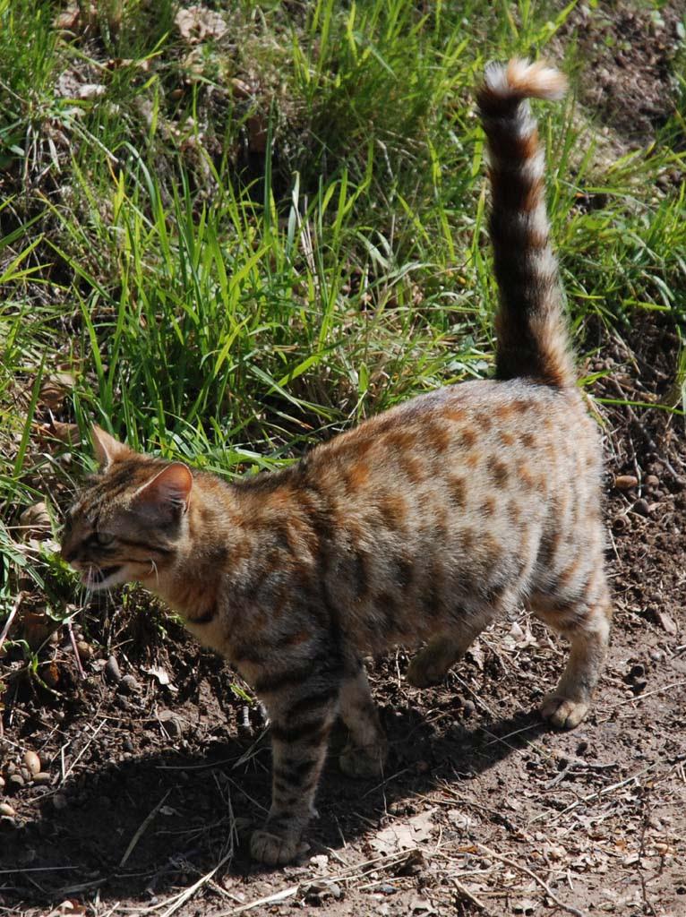 Photo de chat dans le jardin