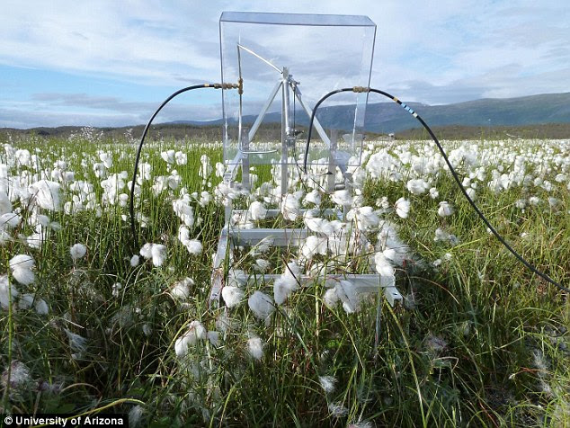 Scientists from the U.S., Sweden and Australia, claim to have shown that a single species of microbe found in Sweden may be driving global warming. The researchers installed special instruments for measuring methane changes using Plexiglas chambers that trap the gases emanating from the soil