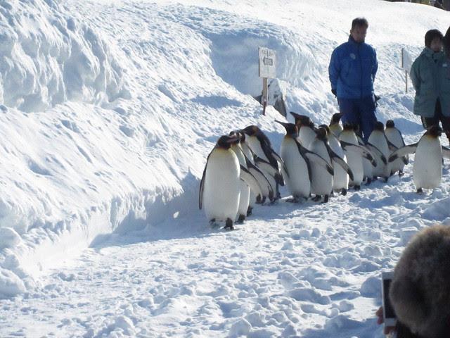Penguin walk