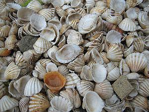 Coquillages à Fadiouth, Sénégal