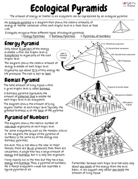 Ecological Pyramid Worksheet Answers