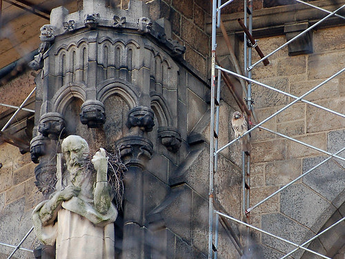 Isolde on the Cathedral Scaffolding