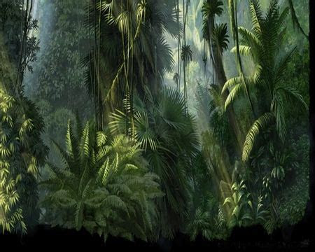 fantasy jungle jungle trees fern forest drawing