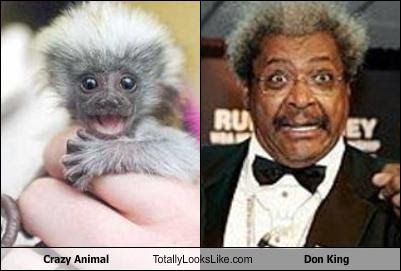 crazy-animal-totally-looks-like-don-king