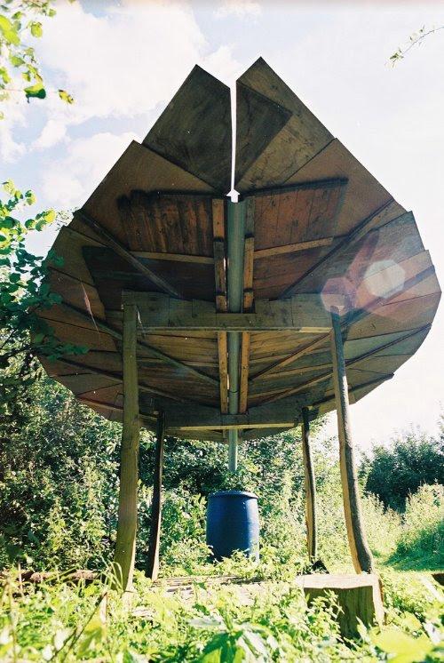 flor madeira coletador agua 2 Folha gigante que coleta água da chuva